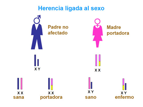 Trastornos recesivos ligados al sexo