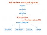 ¿Qué es la mevalonato quinasa (MK)?