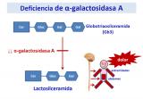 ¿Qué ocurre cuando se produce una deficiencia de α-galactosidasa A?