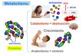 ¿Qué situaciones pueden desencadenar una descompensación metabólica?
