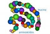 ¿Qué es la aciduria isovalérica? / Proteínas