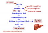 ¿Qué es una aciduria isovalérica?