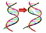 Mutación