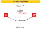 distrofia muscular duchenne defecto genetico: