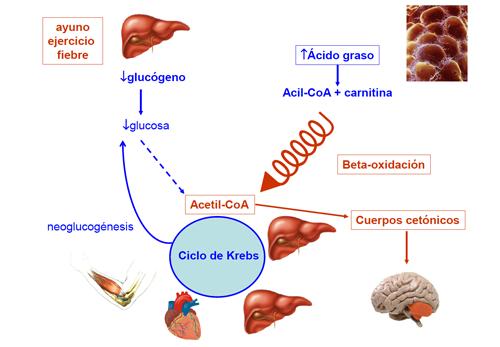 Niños y dieta acelera metabolismo