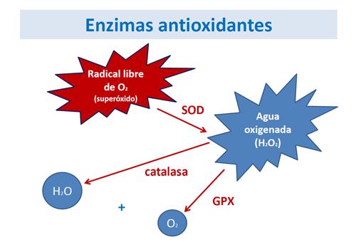 que provoca el estres oxidativo