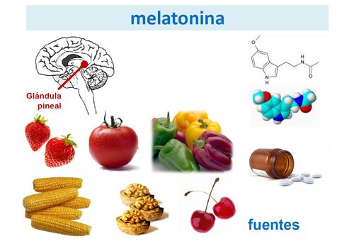 Resultado de imagen para melatonina glandula pineal