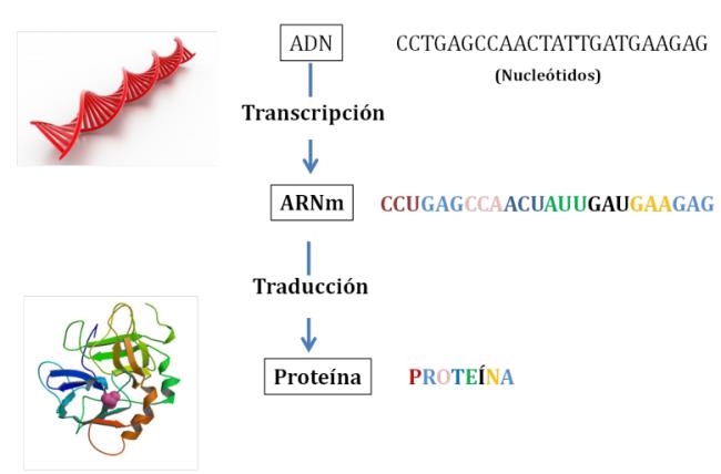 Tipos De Mutaciones Guía Metabólica