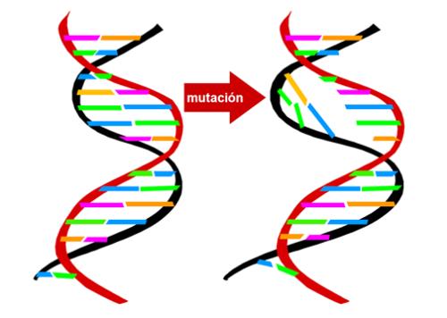 Resultado de imagen de mutacion genetica