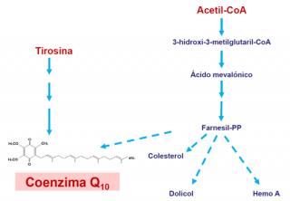 Deficiencia de coenzima Q10