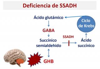 ¿Qué ocurre cuando existe una deficiencia de SSADH?