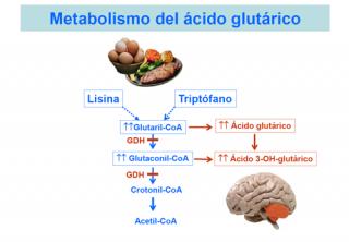 Metabolismo del ácido glutárico