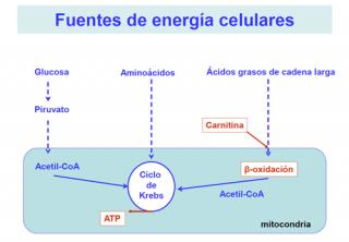 Fuentes de energía celulares