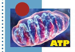 Citopatías mitocondriales