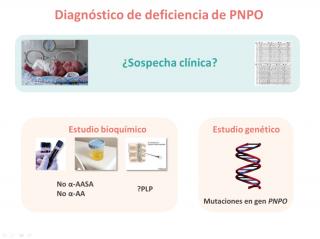 Diagnóstico de deficiencia de PNPO. Imagen: HSJDBCN