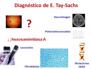 Diagnóstico de la Enfermerdad de Tay Sachs