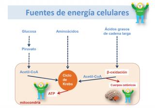 dieta cetosisgenica official site
