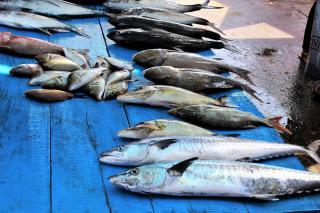 pescado azul