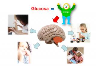 ¿Por qué es tan importante la glucosa en el cerebro?