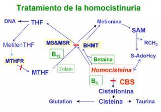 Tratamiento de la homocistinuria