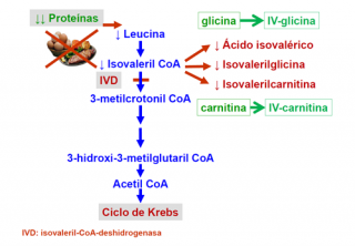 Tratamiento de la aciduria isovalérica