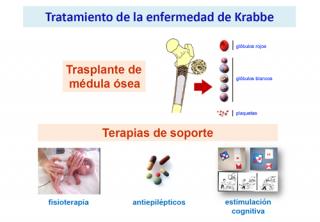 ¿Tiene tratamiento la enfermedad de Krabbe?
