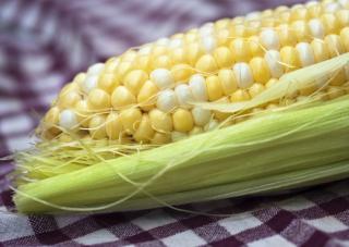 Mazorca de maíz. Imagen: Liz West en Flickr (CC BY 2.0)