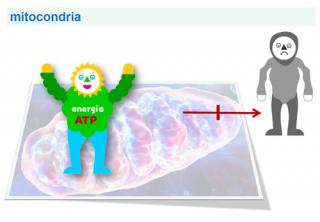 ¿Qué es una enfermedad mitocondrial?