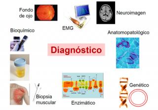 ¿Cómo se diagnostican las enfermedades mitocondriales?