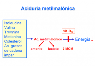 ¿Qué ocurre en la aciduria metilmalónica?
