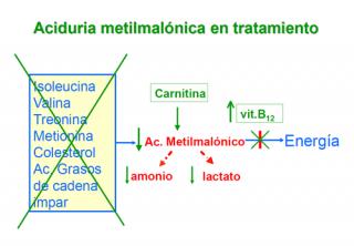 ¿Qué hay que hacer para evitar las consecuencias de una aciduria metilmalónica?