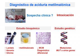 ¿Cómo se diagnostica una aciduria metilmalónica?