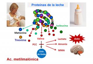 ¿Qué ocurre en el caso de un niño/a que nace con una aciduria metilmalónica?