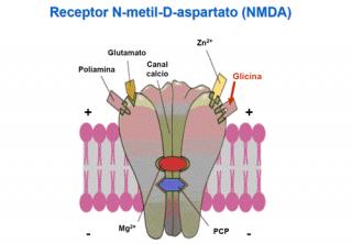 ¿Qué es un neurotransmisor?