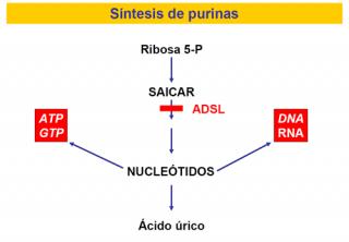 Deficiencia de adenilosuccinato liasa (ADSL)