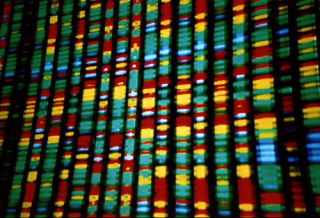 Representación del DNA. Foto: Andy Leppard