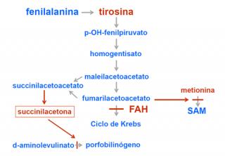 ¿Qué ocurre en la tirosinemia?