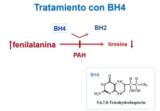 Tratamiento con tetrahidrobiopterina (BH4)
