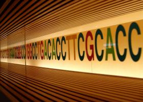 DNA. Foto: Mikito Yoshihito