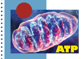 Enfermedades mitocondriales. Imagen: HSJDBCN