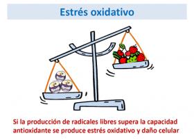 Estrés oxidativo en las enfermedades metabólicas hereditarias (ECM)