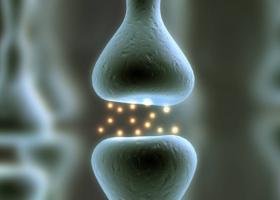 Neurotransmisores