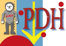 Deficiencia de piruvato deshidrogenasa (PDH). Imagen: HSJDBCN
