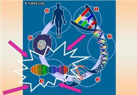 ¿Cómo interpretar los resultados del estudio genético de PKU?