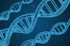 Nuevos fenotipos asociados a la β-oxidación peroxisomal: importancia del estudio de la fisiopatología