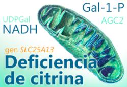 Deficiencia de citrina. Imágen: HSJDBCN