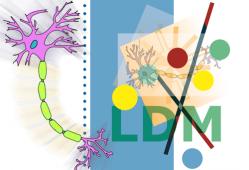 Leucodistrofia metacromática (LDM)