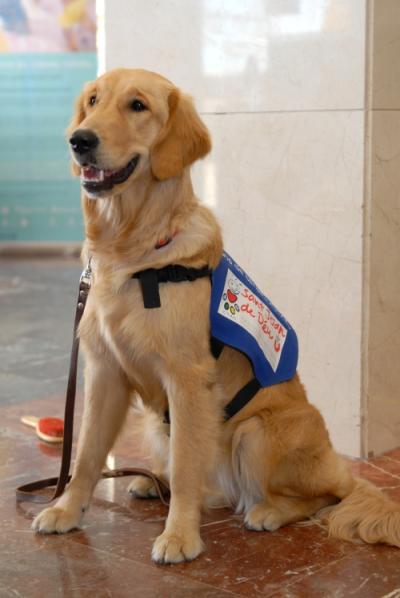 Intervenciones con el apoyo de animales: el perro como herramienta terapéutica
