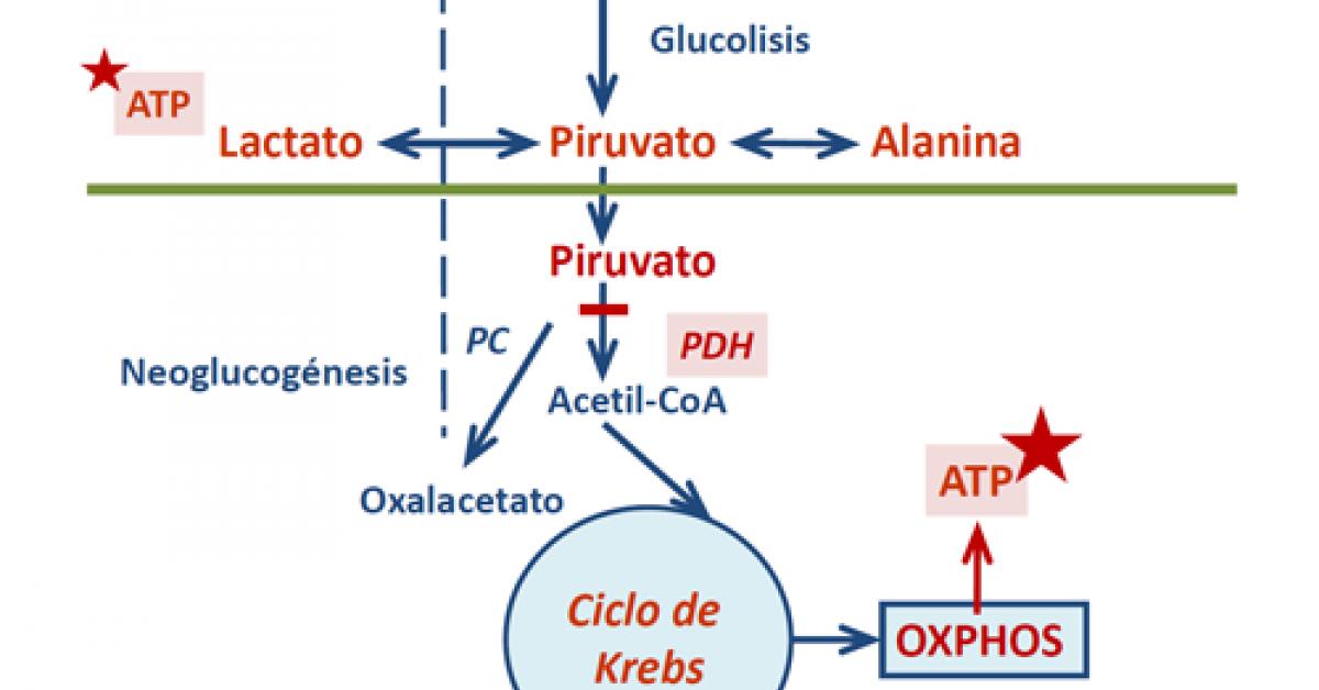 trastornos del metabolismo del piruvato diabetes