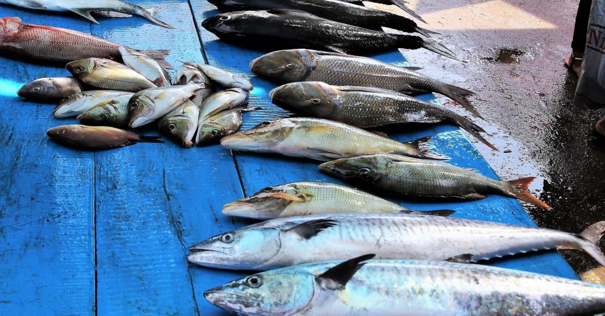diferencias nutricionales entre el pescado azul y el blanco